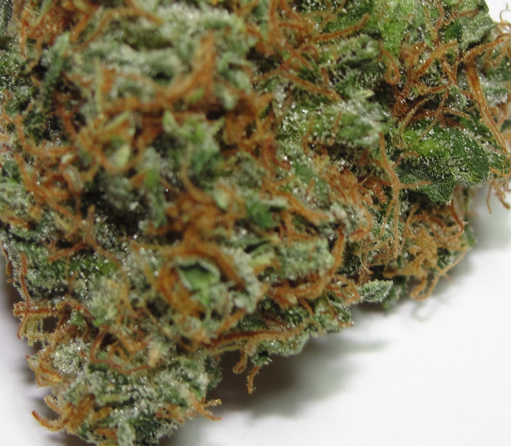 Afkush afghan kush plants 4 life milehigh marijuana for Afghan kush exterieur